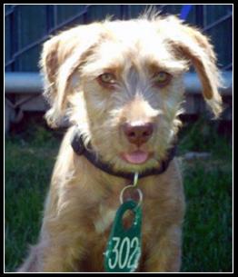 Adopt a Pet: Meet Samson