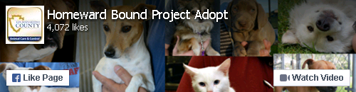 Animal Care and Control - Homeward Bound Project Adopt